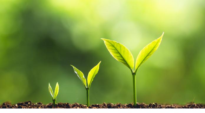 Rozwój Secret Garden Group – okazje biznesowe i akwizycje